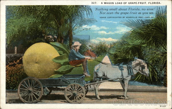 A Wagon Load of Grapefruit - Nothing small about Florida, no siree!