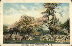 Greetings from Windsor, NY Postcard
