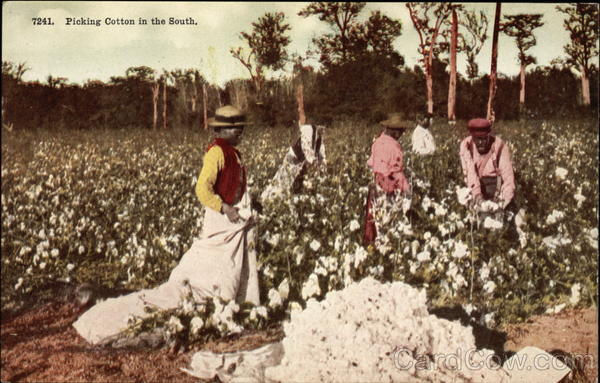 Picking Cotton in the South Black Americana