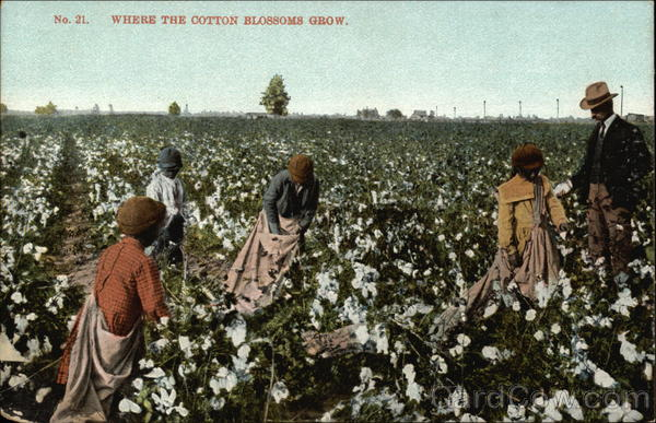Where the Cotton Blossoms Grow Black Americana