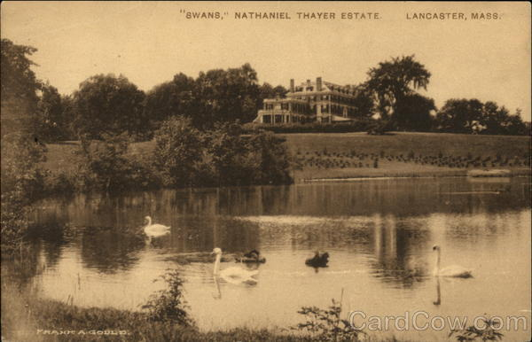 Swans at the Nathaniel Thayer Estate Lancaster Massachusetts