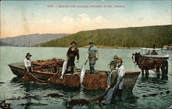 Seining for Salmon, Columbia River Postcard