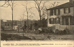 The Remains of the Harrington Elm