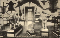 Center View of Animals, Morse Museum