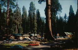 Giant Forest Village - Sequoia National Park