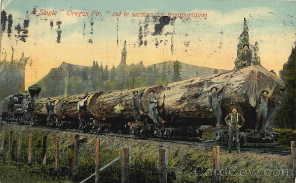 A Single Oregon Fir Logging