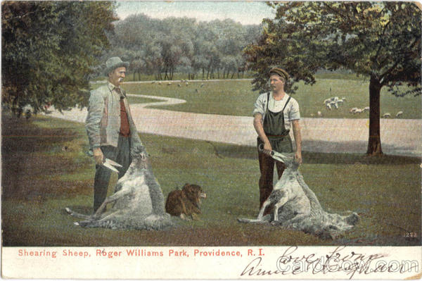 Shearing Sheep, Roger Williams Park Providence Rhode Island