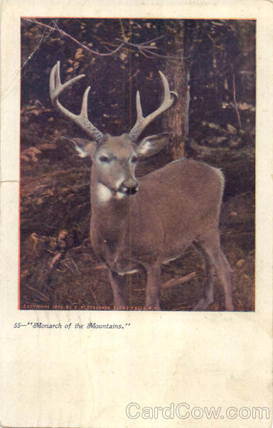 Monarch Of The Mountains Deer