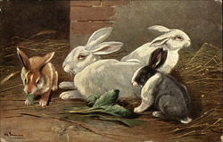 Rabbits Eating and Resting on Straw