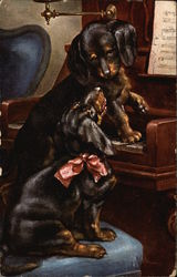Daschund Puppies at the Piano