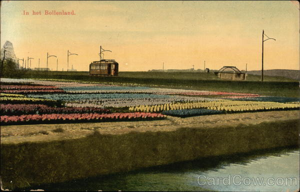 Bulb Fields Netherlands Benelux Countries