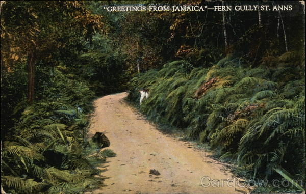Greetings from Jamaica - Fern Gully St. Anns Saint Ann's Bay