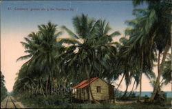 Coconut Groves along the Northern Railway