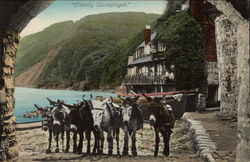 Donkeys on the Beach Postcard