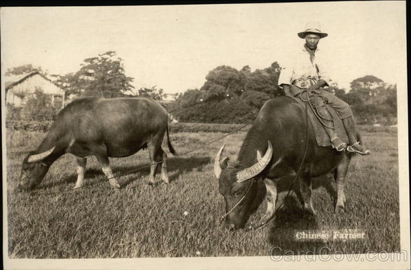 Chinese Farmer & Water Buffalo