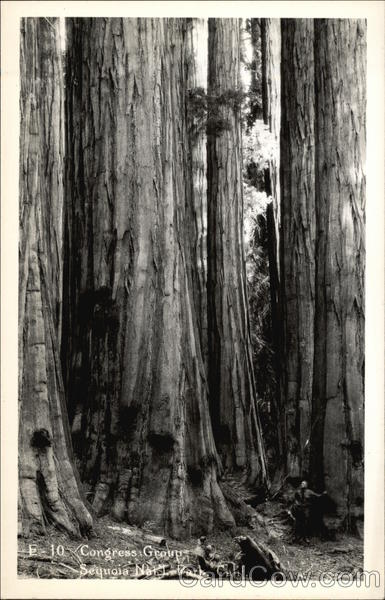 Congress Group of Trees Sequoia & Kings Canyon National Parks