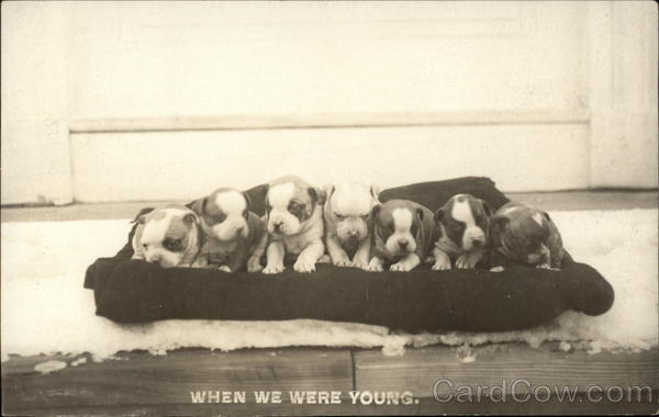 When We Were Young - Puppies Dogs