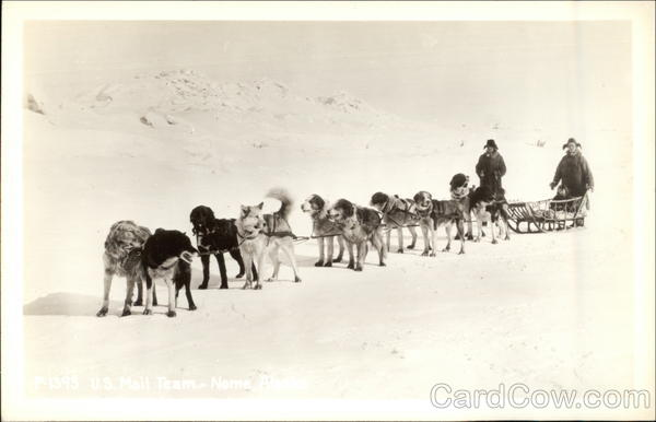 Dog Sled Team Dogs