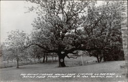The Battlescarred Walnut Tree Standing on Pea Ridge Battlefield