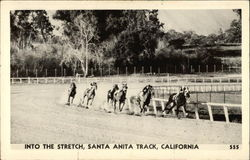 Into the Stretch, Santa Anita Track Postcard