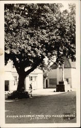 Famous Chestnut Tree and Market Cross