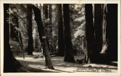 Cathedral Grove, Muir Woods