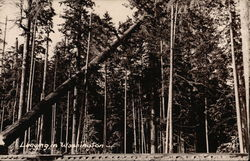 Logging in Washington