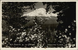 Mt. Shasta in the Spring