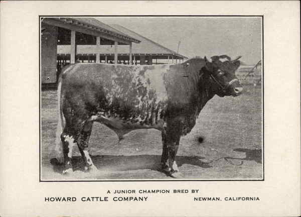 A Junior Champion bred by Howard Cattle Company Newman California