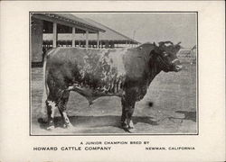 A Junior Champion bred by Howard Cattle Company