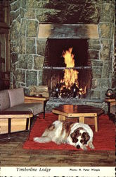 St. Bernard in Front of Fireplace