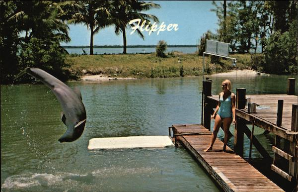 Flipper the Talented Porpoise, Miami Seaquarium Florida