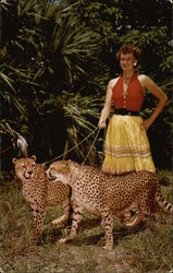 Tame, Hunting Leopards Being Taken For a Stroll At Africa-U.S.A