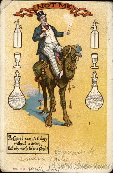 A Camel Can Go 8 Days Without A Drink Antique Postcard