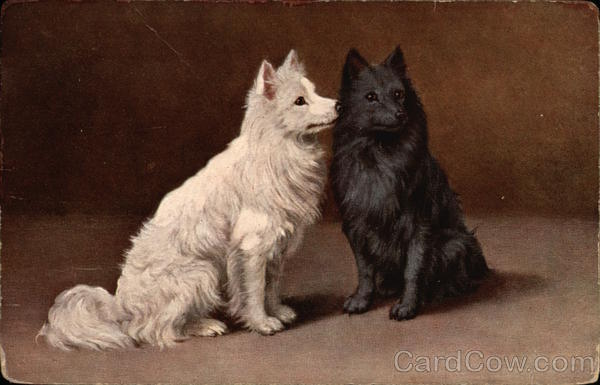 A White Dog and a Black Dog Dogs