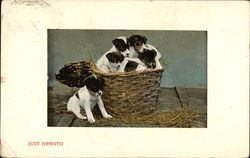 Just Arrived - Puppies in a Basket