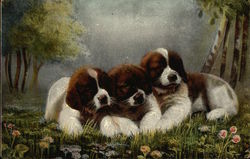 Three St. Bernard Puppies