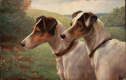 Foxterriers, Wire