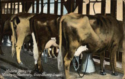 Modern Dairying - Milking by Machinery