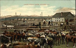 Union Stock Yards, Chicago, ILL
