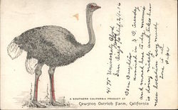 Cawston Ostrich Farm, California