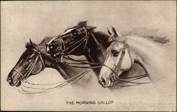 The Morning Gallop Horses