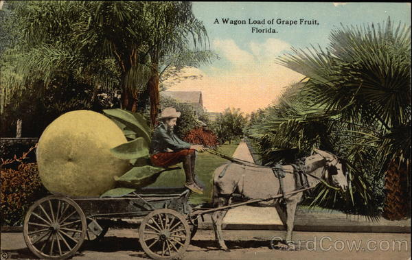 A Wagon Load of Grape Fruit, Florida Exaggeration