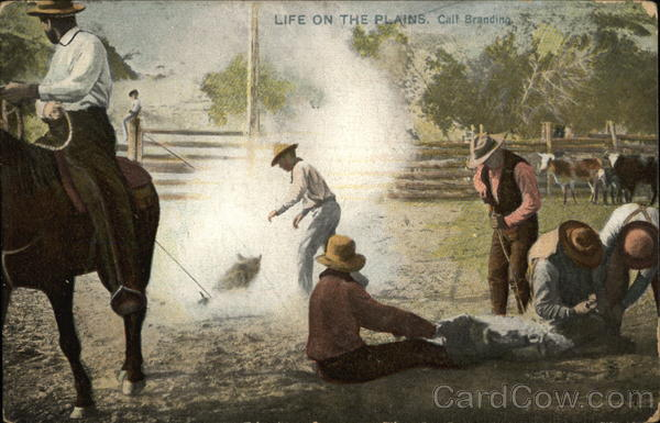 Life on the Plains, Calf Branding Cowboy Western