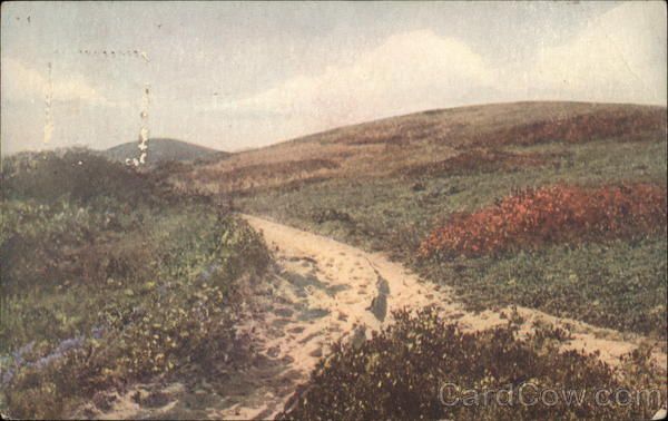 Among Saul's Hills Nantucket Massachusetts