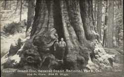 General Grant Tree, General Grant National Park, Cal