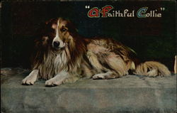 A Faithful Collie