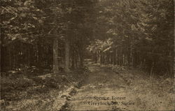Spruce Forest - Greylock Mountain