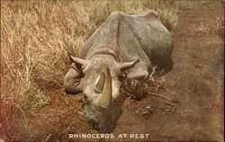 Rhinoceros at Rest