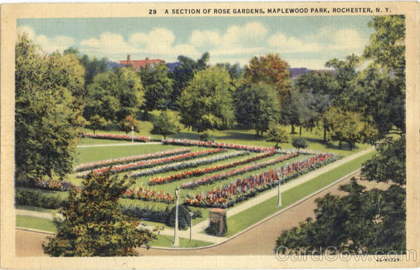 A Section Of Rose Gardens, Maplewood Park Rochester New York